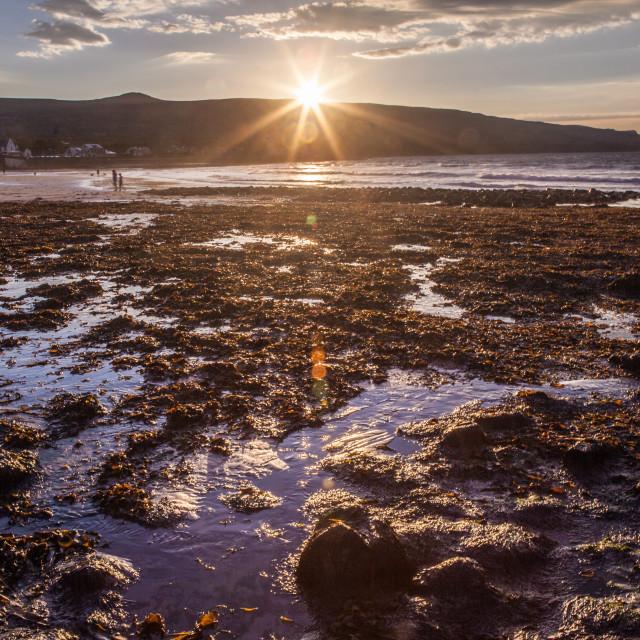 """Seaweed Sunset"" stock image"