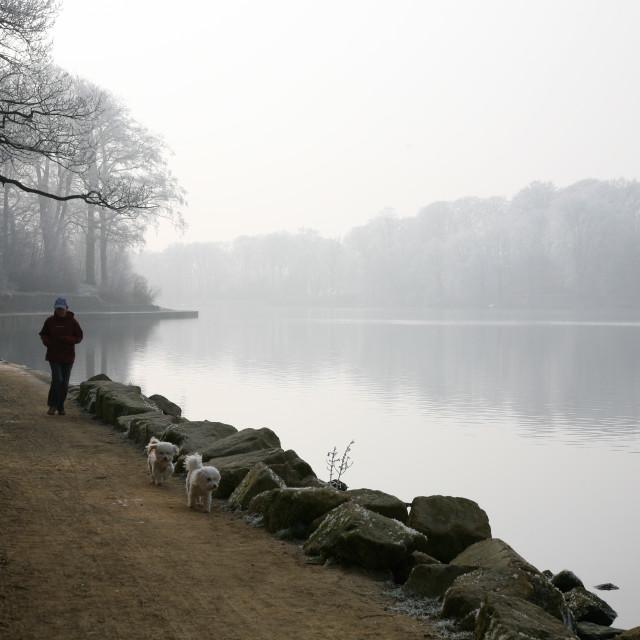 """Walking Dogs Around Frosty Lake"" stock image"