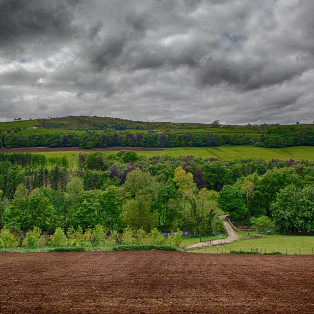 """Glenarm Forest, Ulster"" stock image"