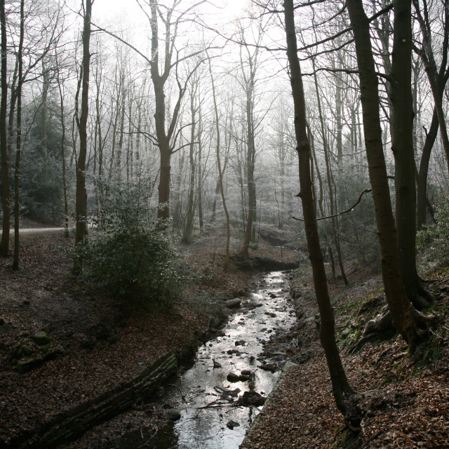 """""""Winter Forest Stream"""" stock image"""