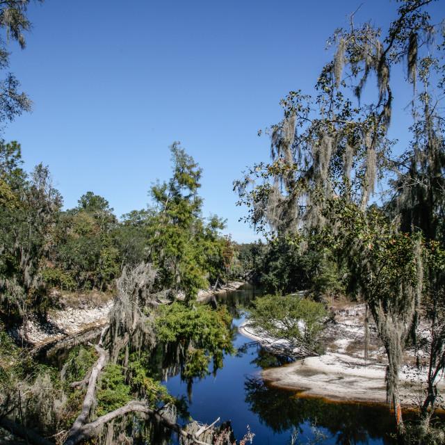 """Florida Riverbend"" stock image"
