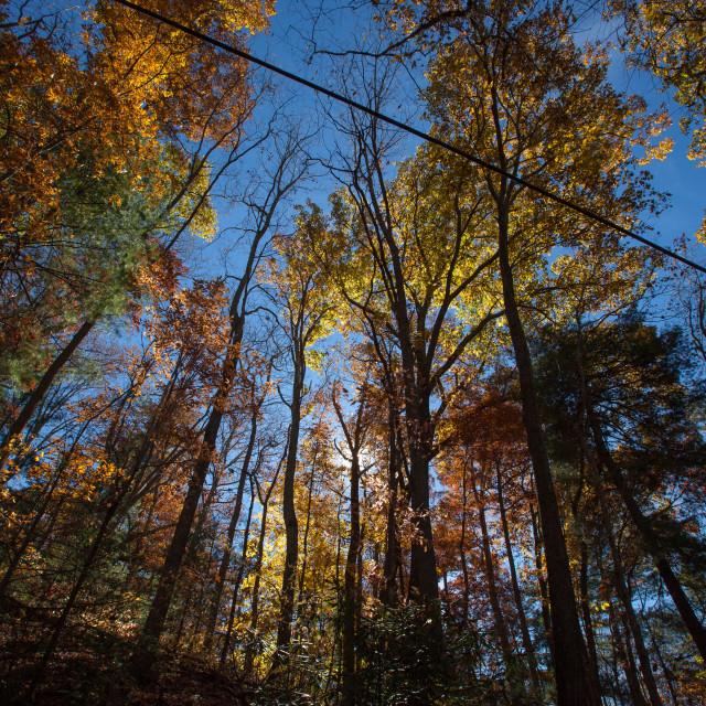 """""""Appalachian Fall Colors"""" stock image"""