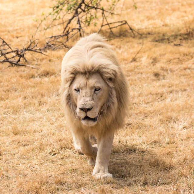 """""""Confidence of a King"""" stock image"""