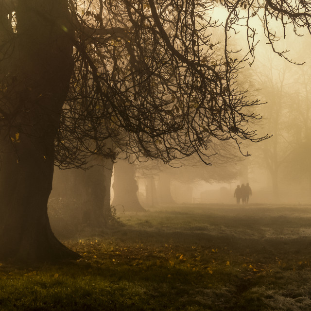 """Autumn Morning Walking Beneath Trees in Wiltshire, UK"" stock image"
