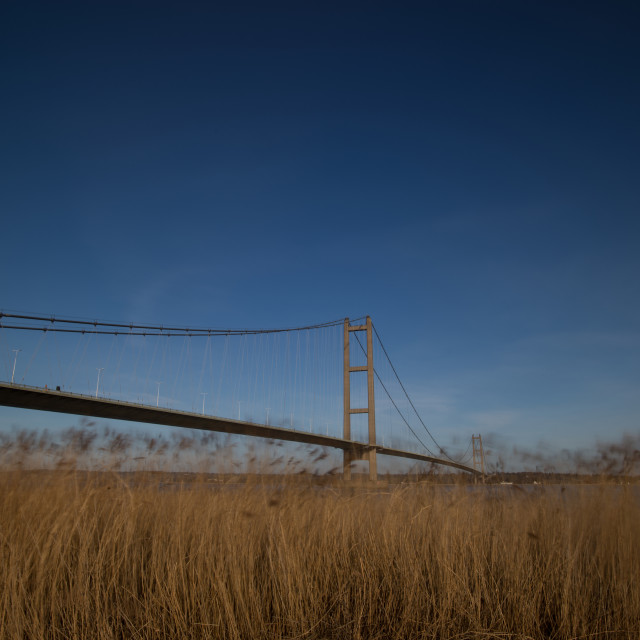 """The Humber Bridge with Reeds"" stock image"