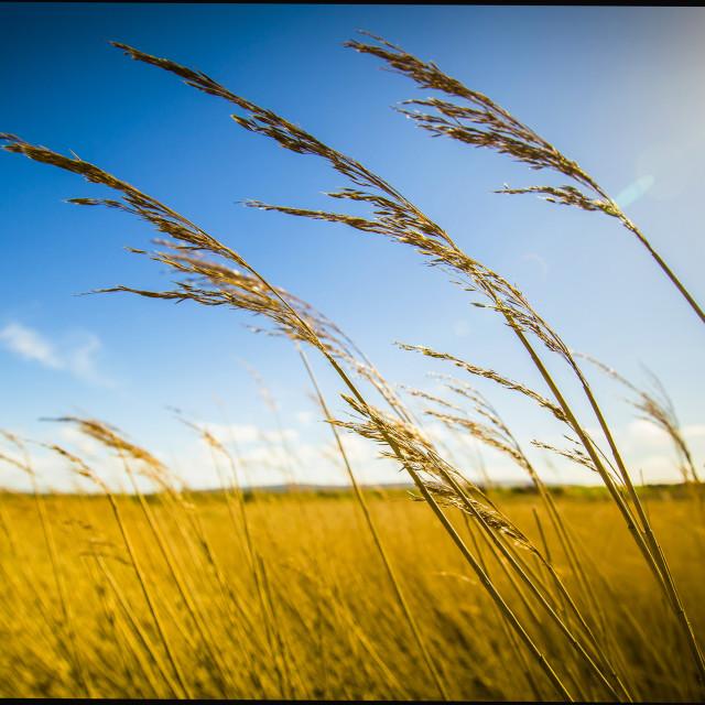 """""""Summertime"""" stock image"""