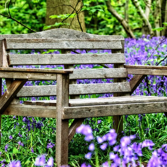 """Blue bell bench"" stock image"