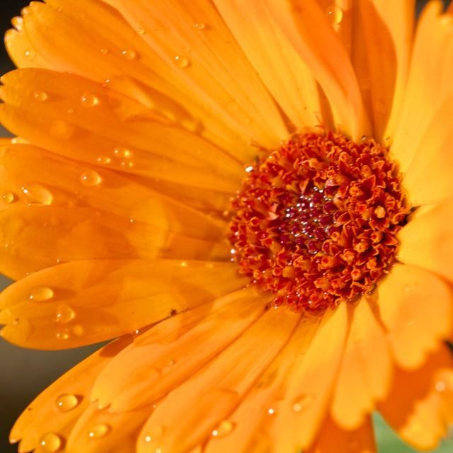 """Summer bloom"" stock image"