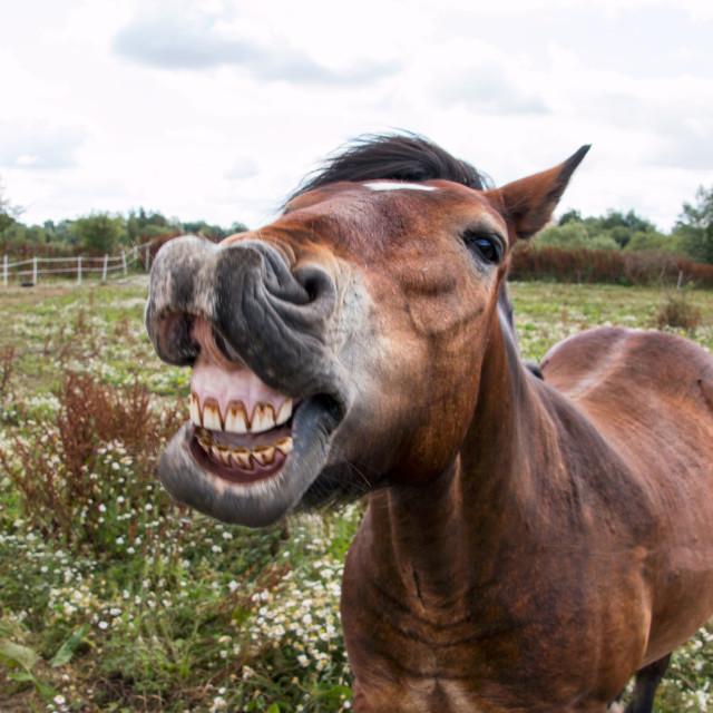 """Say cheese"" stock image"