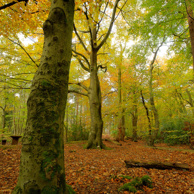 """Autumn Woods"" stock image"