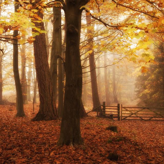 """November Mist"" stock image"