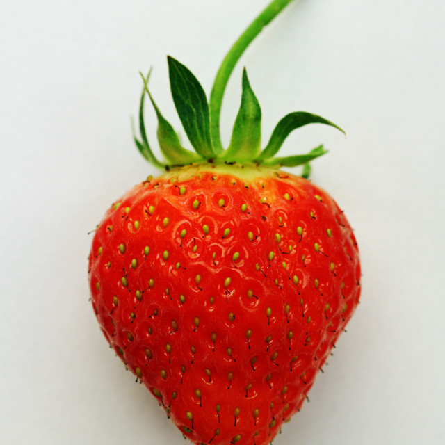 """Strawberry I"" stock image"
