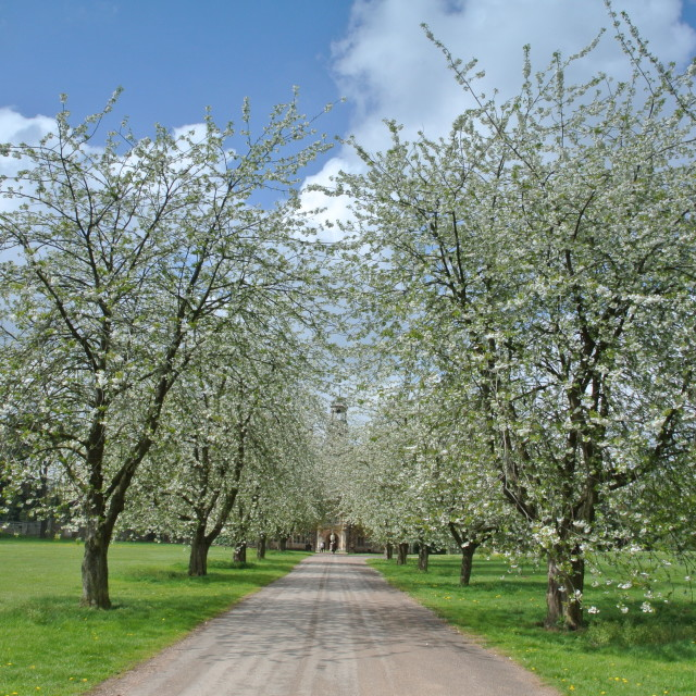 """""""Nottinghshire Blossoms"""" stock image"""