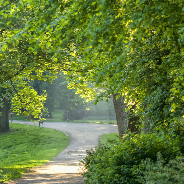 """""""Park in early morning light"""" stock image"""