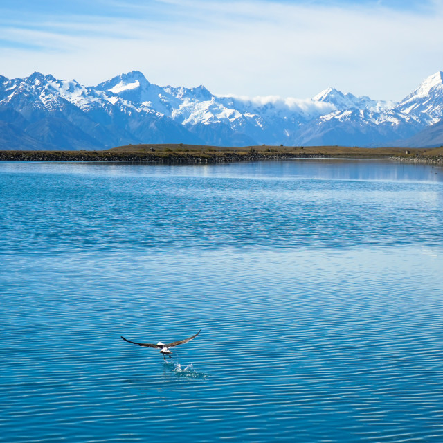 """Mystery bird - Lake Pukaki NZ"" stock image"