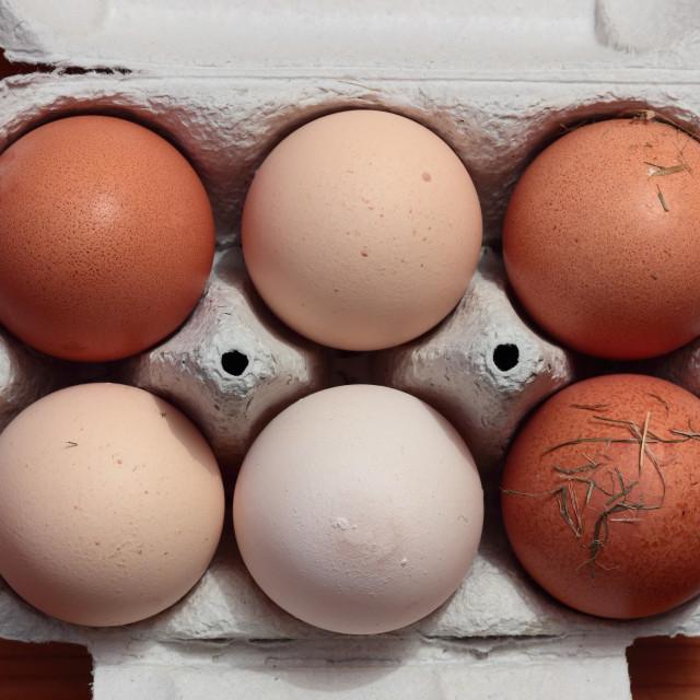 """Freshly laid eggs"" stock image"