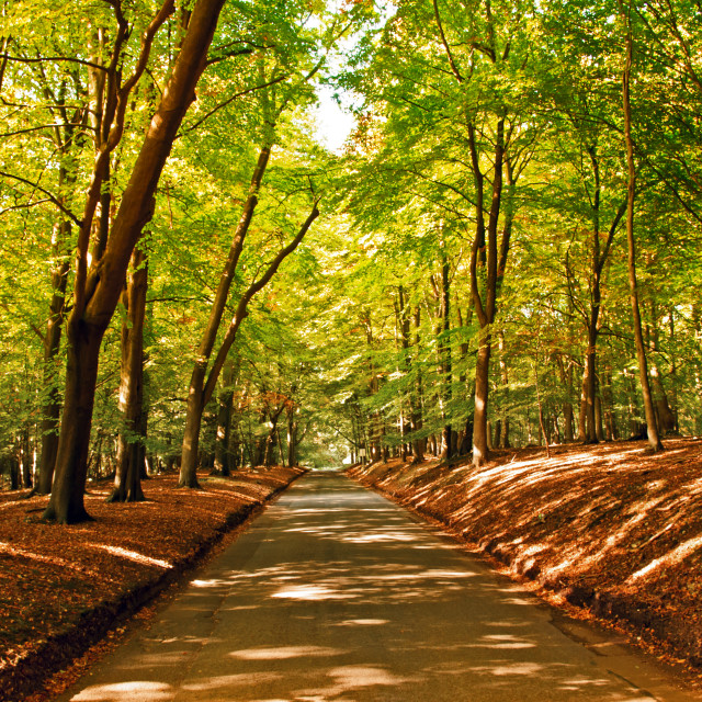 """UK - Ashridge Estate in Autumn"" stock image"