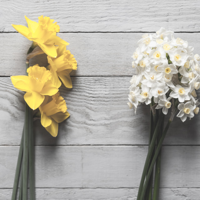"""Yellow and white narcissus flowers on wooden background"" stock image"
