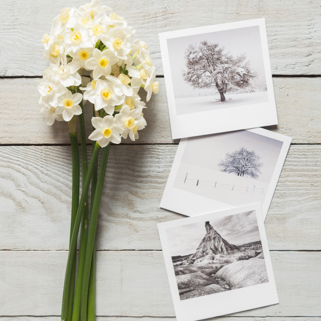 """Bunch of white narcissus and printed photos on a wooden table"" stock image"