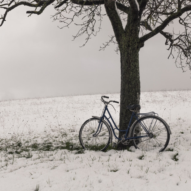 """Vintage or retro bicycle left on a tree. Snowy field"" stock image"