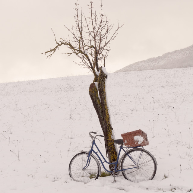 """Vintage or retro bicycle with a suitcase left on a tree. Snowy field"" stock image"