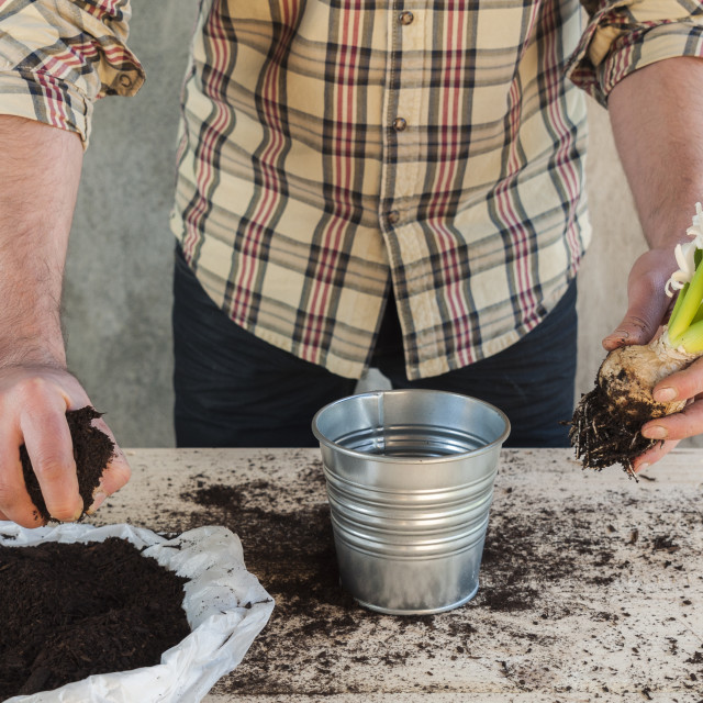 """Man taking soil to fill a potted plant"" stock image"