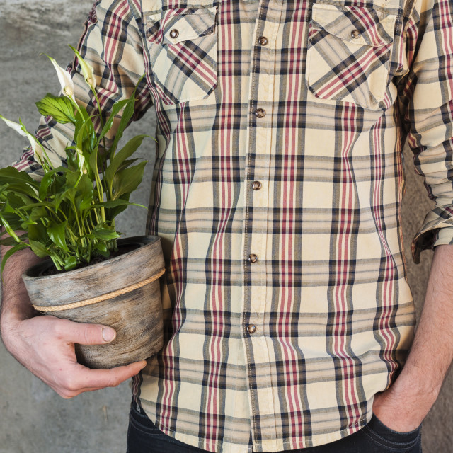 """Man holding a calla plant in a flower pot"" stock image"