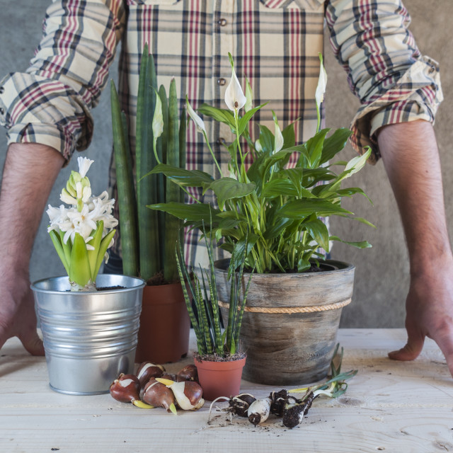"""Man with some plants and flowers in a table"" stock image"