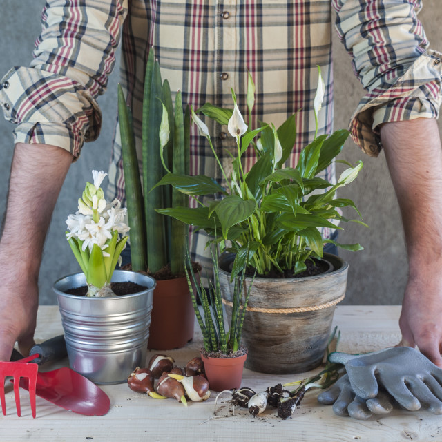 """Man with flowers and garden tools"" stock image"
