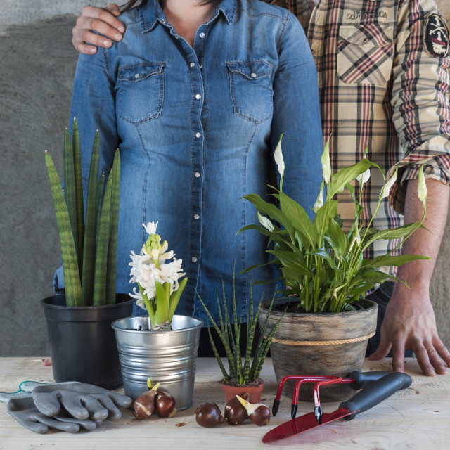 """Man and woman with flowers and garden tools"" stock image"