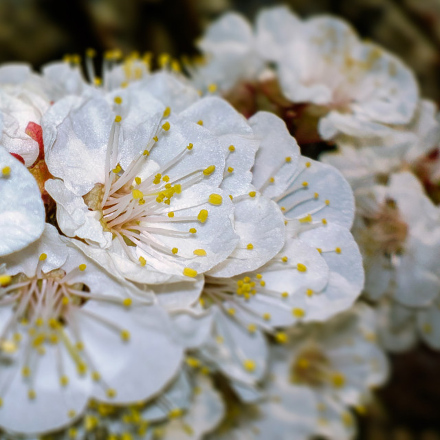 """""""The beauty of Spring (V.3)"""" stock image"""