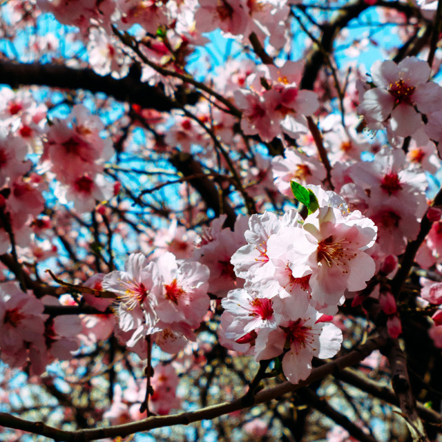 """""""The beauty of Spring (V.5)"""" stock image"""