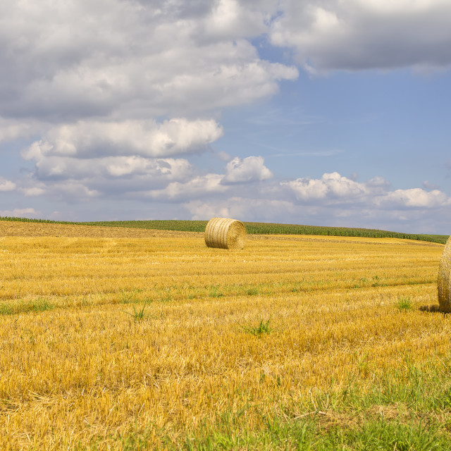 """""""Hay in the field"""" stock image"""