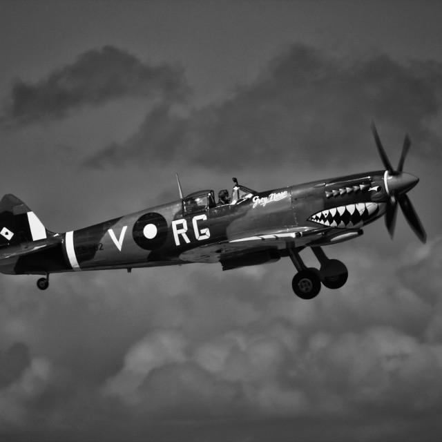 """Supermarine Spitfire Mk VIII"" stock image"