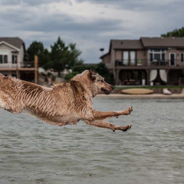 """Doggy Jump"" stock image"