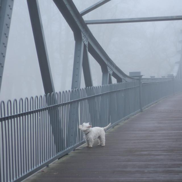 """""""Foggy bridge and lonely white dog"""" stock image"""