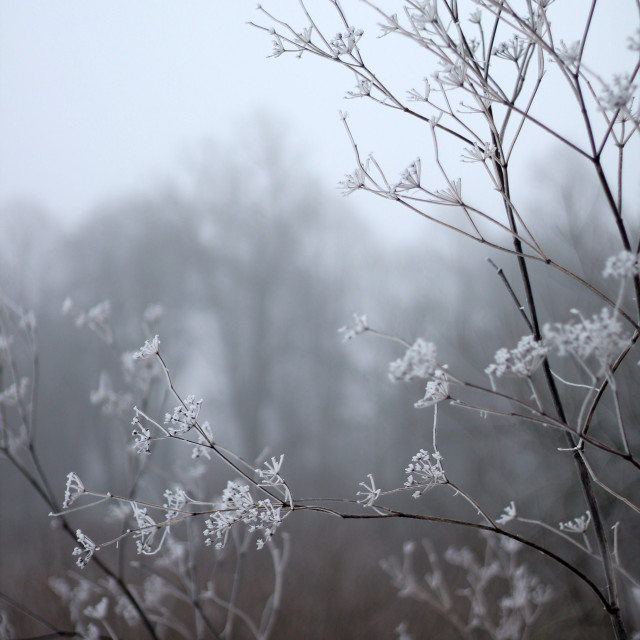 """""""Early spring flowers frozen by frost"""" stock image"""