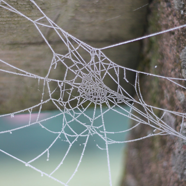 """""""Frozen (frosted) spider's web"""" stock image"""