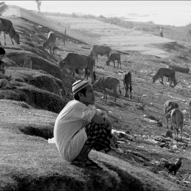 """Cham People and Cows"" stock image"
