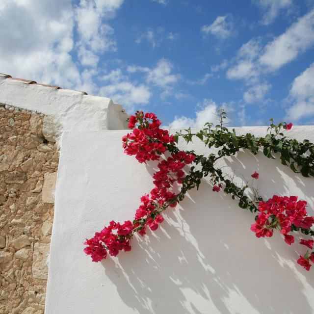 """Flowers on the Wall"" stock image"