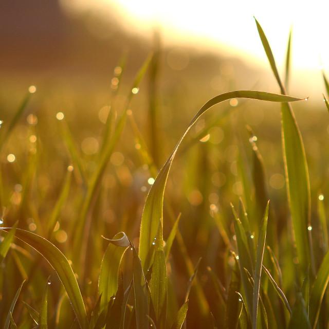 """""""Early Sunrise"""" stock image"""