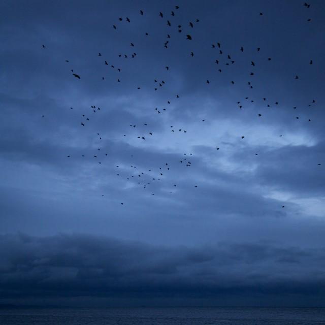 """The Birds"" stock image"