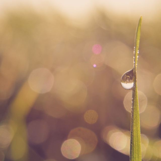 """Morning drops"" stock image"