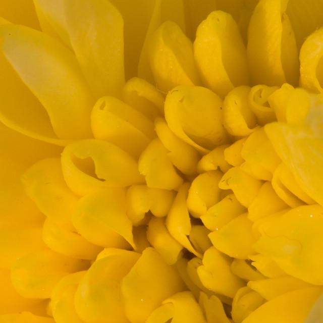 """""""Flower Heart"""" stock image"""