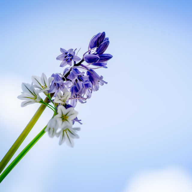 """""""Flower in the sky"""" stock image"""