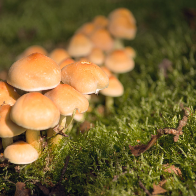 """""""Toadstool cluster"""" stock image"""