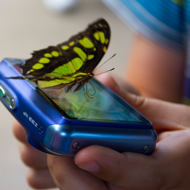 """Butterfly checking it's selfie"" stock image"