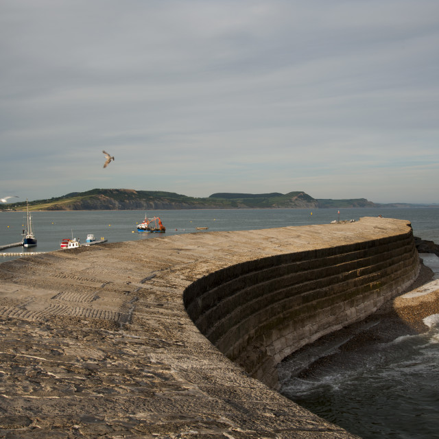"""The Cobb at Lyme Regis"" stock image"