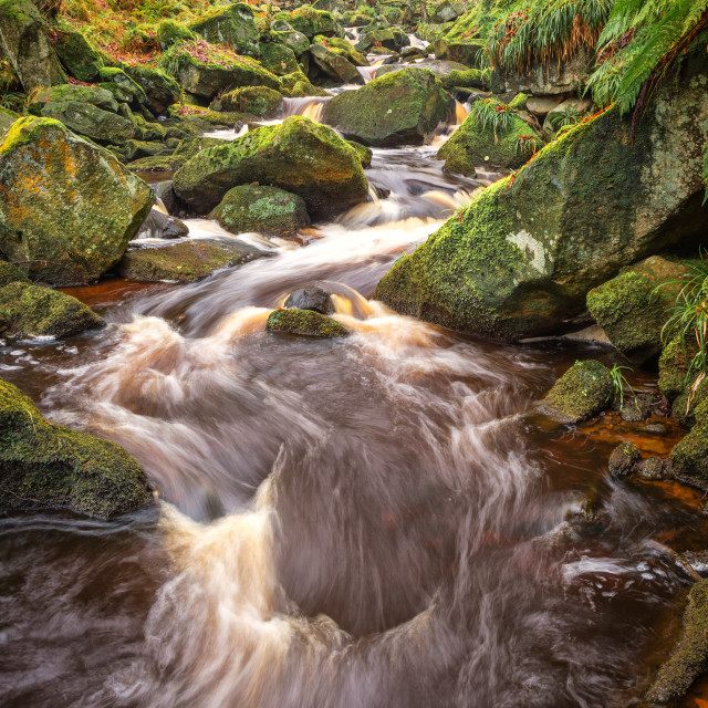 """""""Padley Gorge in Autumn"""" stock image"""