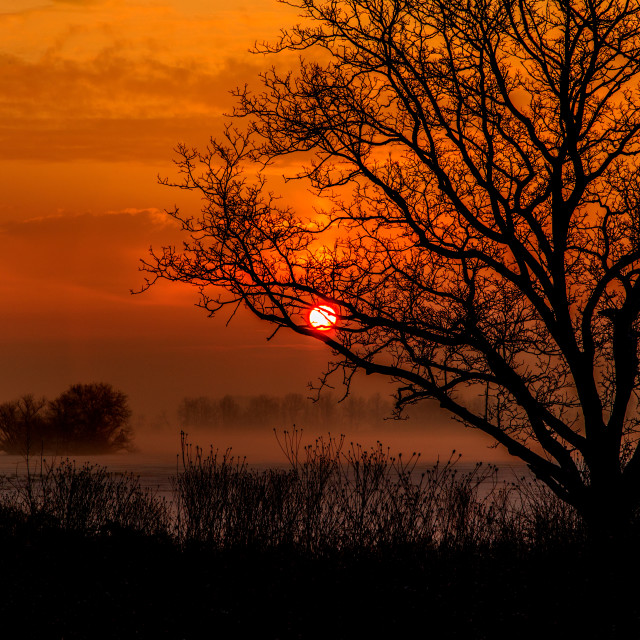 """Red sky and Tree at Dawn"" stock image"